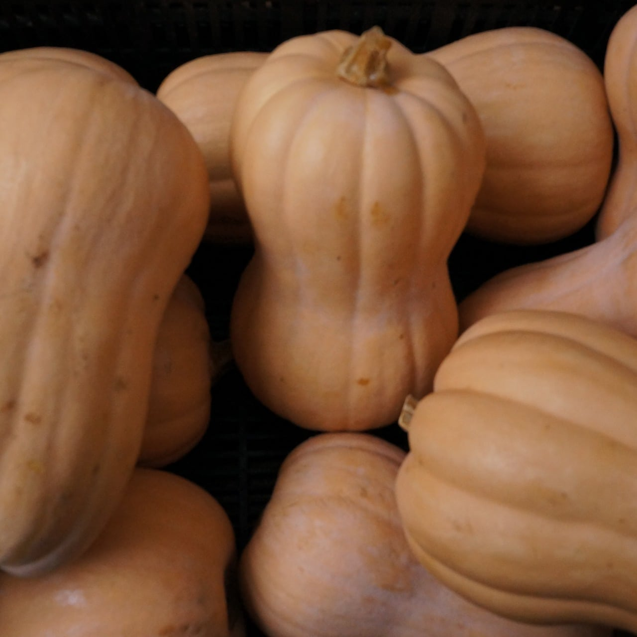 Butternut Squash from love Me Tender